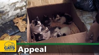 Download Welcome to the world – Cats Protection appeal Video