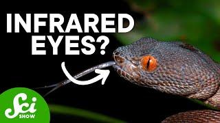Download 9 Weird Ways Animals See the World Video
