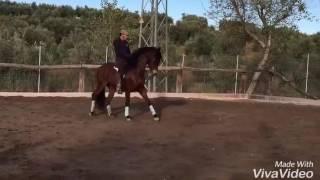 Download JEFE V - PRE stallion high-school MASTER for sale - TBSH Video
