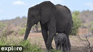 Download Africam Tembe Elephant Park powered by EXPLORE.org Video