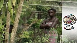 Download The Battle for Suriname's Rainforest Video