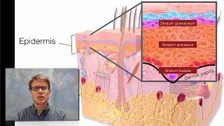 Download Integumentary System Video