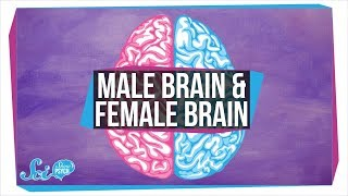Download Are There ″Male″ and ″Female″ Brains? Video