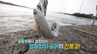 Download 뜰채 숭어잡이의 달인과 그 진풍경, mullet fishing [전국시대] Video