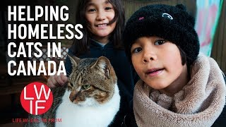 Download Helping Homeless Cats (in Canada) Video