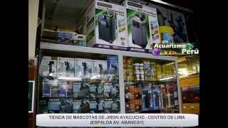 Download Tiendas de mascotas (peces) en JIRON AYACUCHO - MY LITTLE MASCOT STAND 108 Video