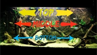 Download Top, Middle & Bottom Swimming Aquarium Fish Video