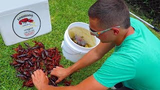 Download Stocking My Ponds With Live CRAWFISH!! 🦞 Video