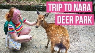 Download Nara Deer Park in Japan! - Getting to Nara Park travel guide tour - Video