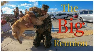 Download Golden Retriever Welcomes His Marine Home   Oshies World Video