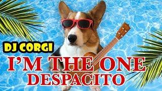 Download DJ CORGI: I'm the One & Despacito on Ukulele Video