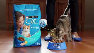Download Protege la salud de tu gato con Cat Chow Defense Plus Video