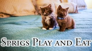 Download Sprigs Play and Eat Video