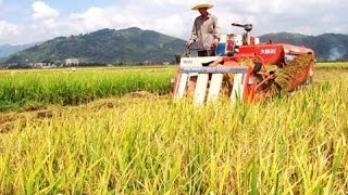 Download China to modernize, restructure agriculture sector Video