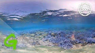 Download Rainbow Warrior in Taiwan (360 VR) Video