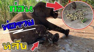 Download พ่อบัวบานรวยมาก ช้างคนรวย รวยเกิ๊นนนน Video