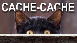 Download CACHE-CACHE - PAROLE DE CHAT Video