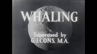 Download 1940s whaling in the Antarctic Video