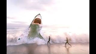 Download BIGGEST Sharks Ever! Video