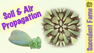 Download Soil & Air Leaf Propagation: How to Propagate Succulents PART 1 Video