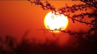 Download African Sunset Soft Focus - Royalty Free HD Stock Video Footage. Video