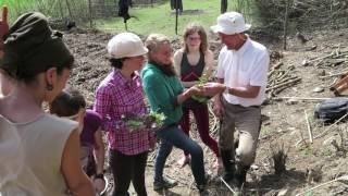 Download Syntropic Agroforestry in Spain with Ernst Götsch Video