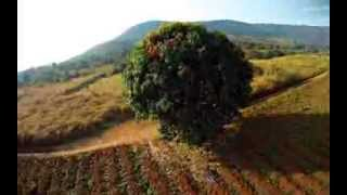 Download Shrediquette Hexacopter Spider MM6 in Cameroon Video