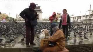 Download Expedición al país natal - Mongolia | Reportajes y documentales Video