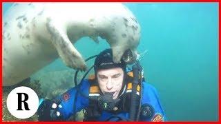 Download La foca si butta sul sub, poi sono solo coccole marine Video