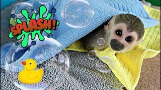 Download Baby Monkey oLLie Bath & Diaper Time (Part 2) Video