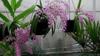 Download Những loại hoa lan có hương thơm nhất Video