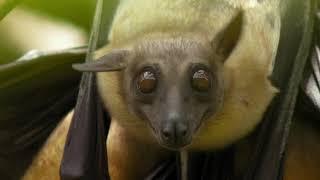 Download Bats Video