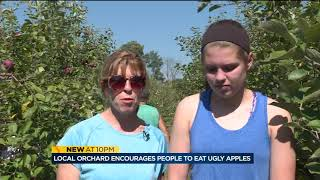 Download 'Ugly' apples at local orchard result of heavy rain Video