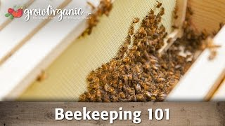 Download Beekeeping for Beginners - Hive Set Up Video