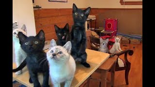 Download The Dance Of The Dramatic Foster Kittens Video