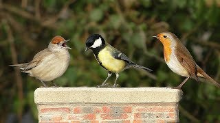 Download Video for Cats - Beautiful Birds in My Garden NEW ✔️ Video