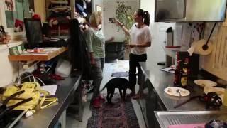 Download #007 Hunde-WG Im Tierheim München, Video