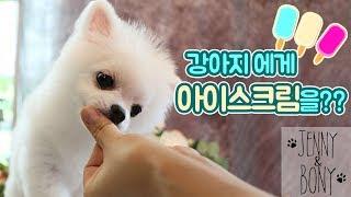 Download 더위에 지친 강아지 ″보니″에게 시원한 아이스크림 만들어주기 (강아지 유튜버)ㅣ디바제니 Video