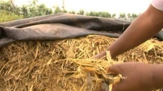 Download Effective Fodder Utilization and Nutrients Supplementation P2 Video