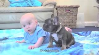 Download Cutest baby & puppy best friends from Shrinkabulls world famous - by Mindy Grady Video