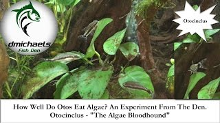 Download How Well Do Otocinclus Catfish Eat Algae? A Little Experiment From The Den.... Video