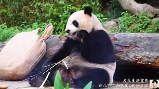 Download Taipei Zoo 台北市立動物園 動物日常 Video