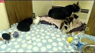 Download Tiny Kittens Sloaney is hissy during this visit everyone is okay Video