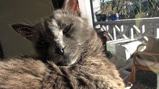 Download The Kits Cats - Vlog #1 Video