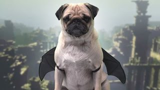 Download Pugs Make the WORST Last Guardians Video