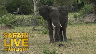 Download Rambunctious Elephant Roughhouses with Ronald the Rover Video