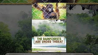 Download The Rainforests Are Under Threat Video