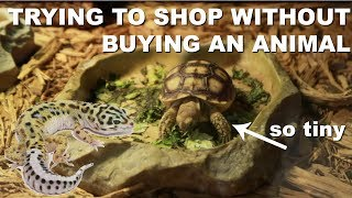 Download MY MOM WANTED TO BUY HIM... (Preparing a Leopard Gecko Cage) Video