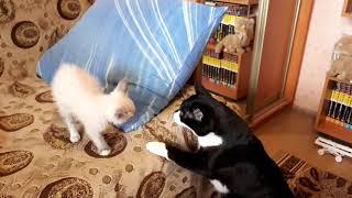 Download Принесли кота домой... Video