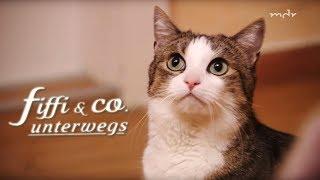 Download Wie der Tierarztbesuch den Schrecken verliert | MDR um 4 | MDR Video
